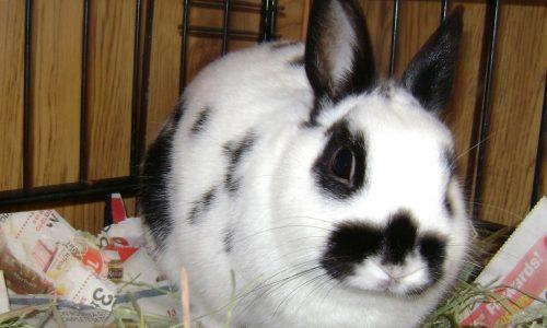 Pawsitive Personal Pet Care client Bun