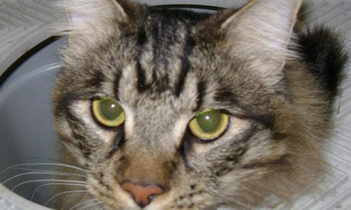 Pawsitive Personal Pet Care client Bob