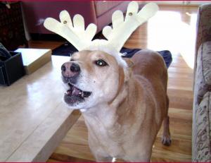 Pawsitive Personal Pet Care client